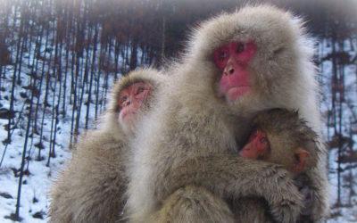 Surviving Siberia – get the right coat!