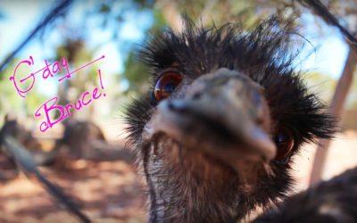 Australia wins craziest animals prize