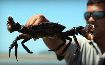 Of mangrove mud crabs and big city bar tabs, the Mighty Australian Road Trip – Part 2