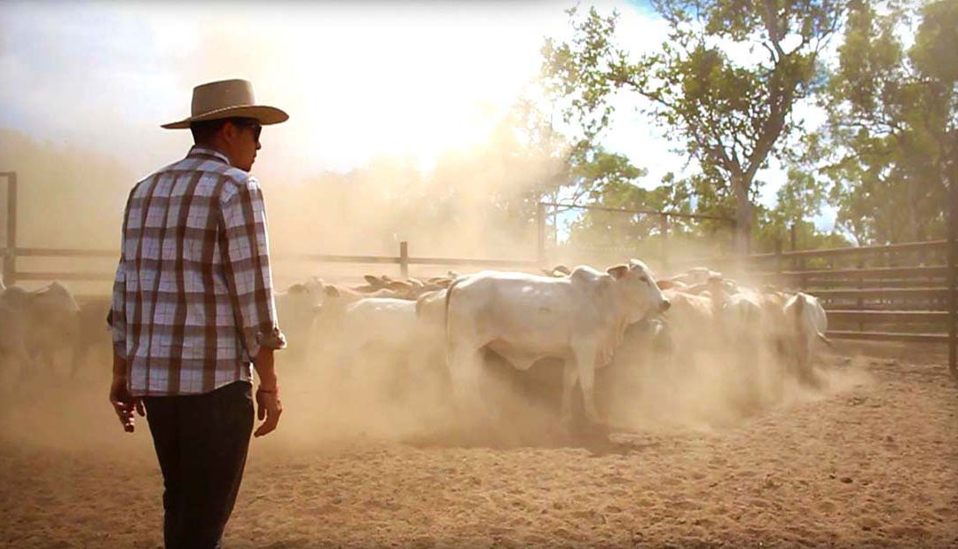 The unsung heroes of Australia's cattle country