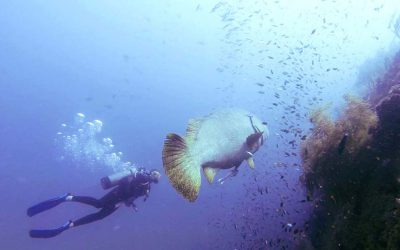 The Magic of Diving Shipwrecks in North Queensland